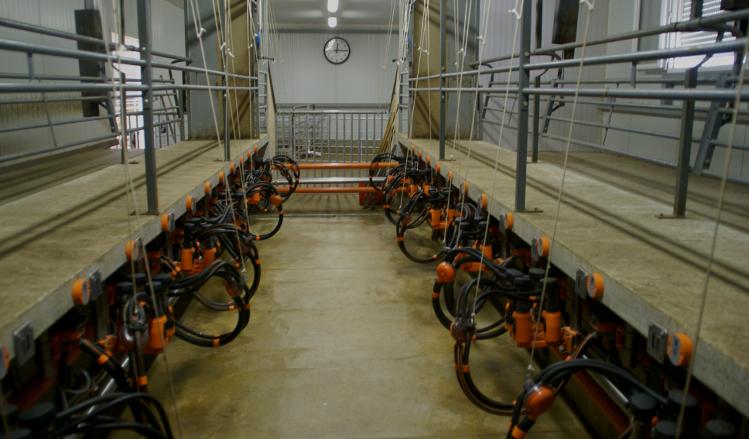 Salle de traite Chèvre